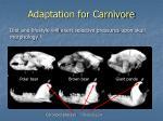 adaptation for carnivore