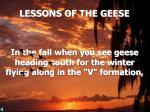 lessons of the geese