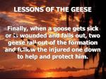 lessons of the geese14