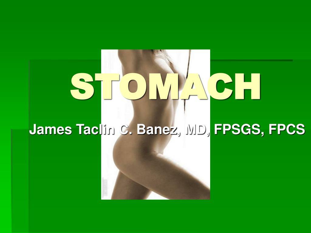 stomach l.
