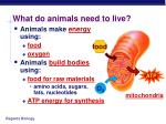 what do animals need to live