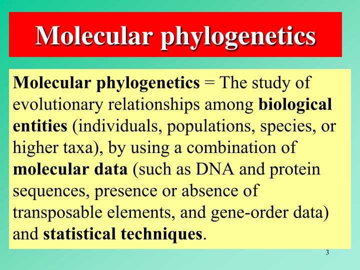 Molecular phylogenetics3