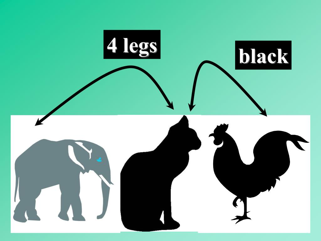 4 legs