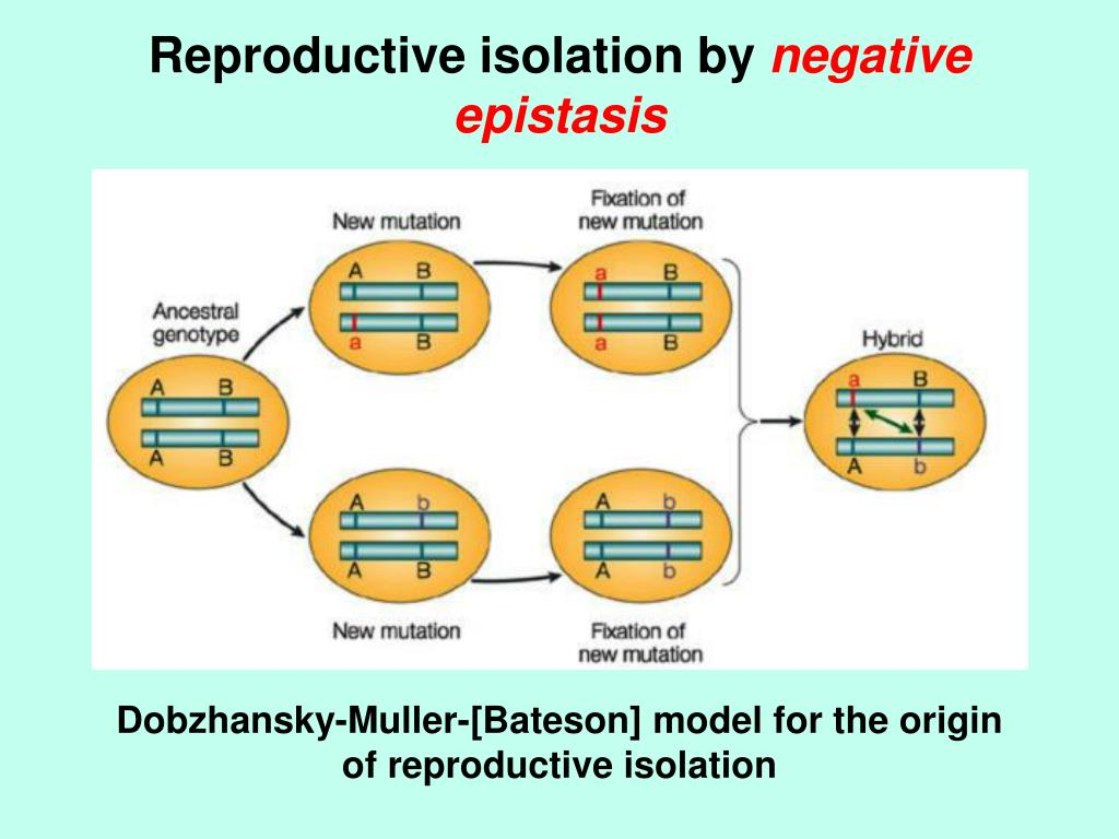 Reproductive isolation by