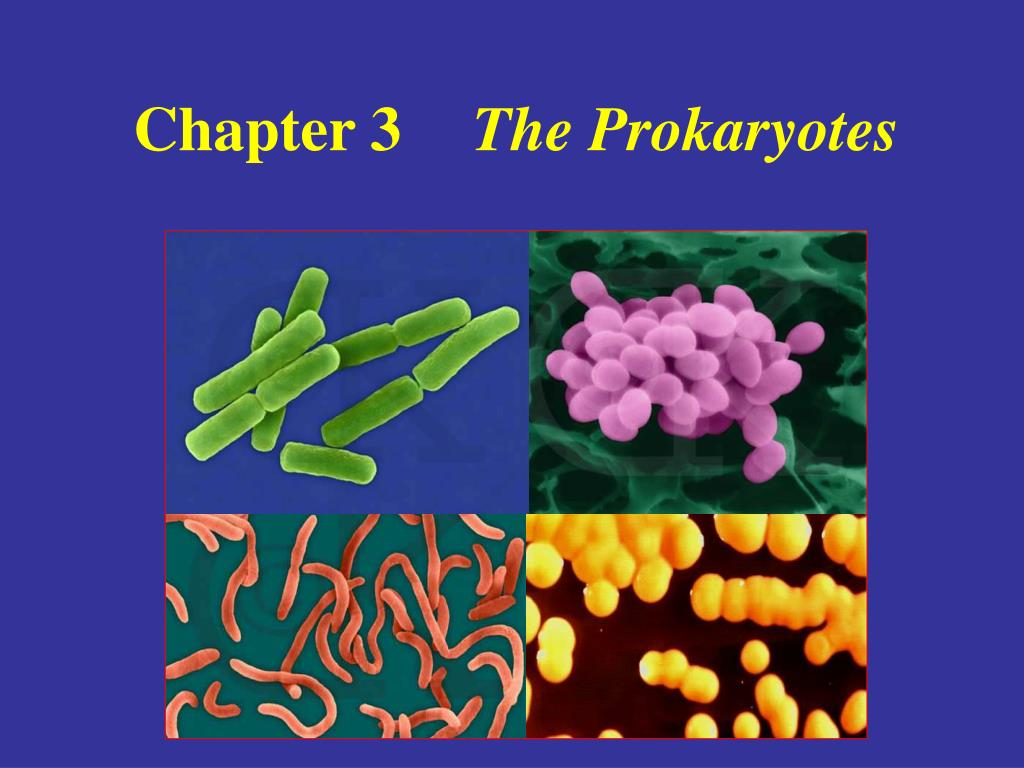chapter 3 the prokaryotes l.