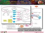 smart metadata iii source contextualization ontology refinement