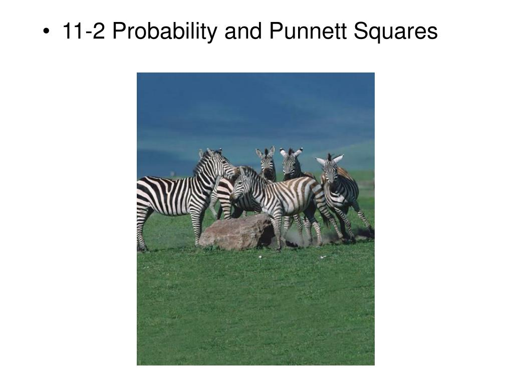 11 2 probability and punnett squares l.
