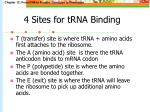 4 sites for trna binding