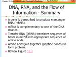 dna rna and the flow of information summary