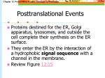 posttranslational events42