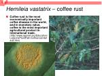 hemileia vastatrix coffee rust