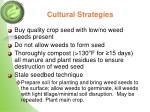 cultural strategies