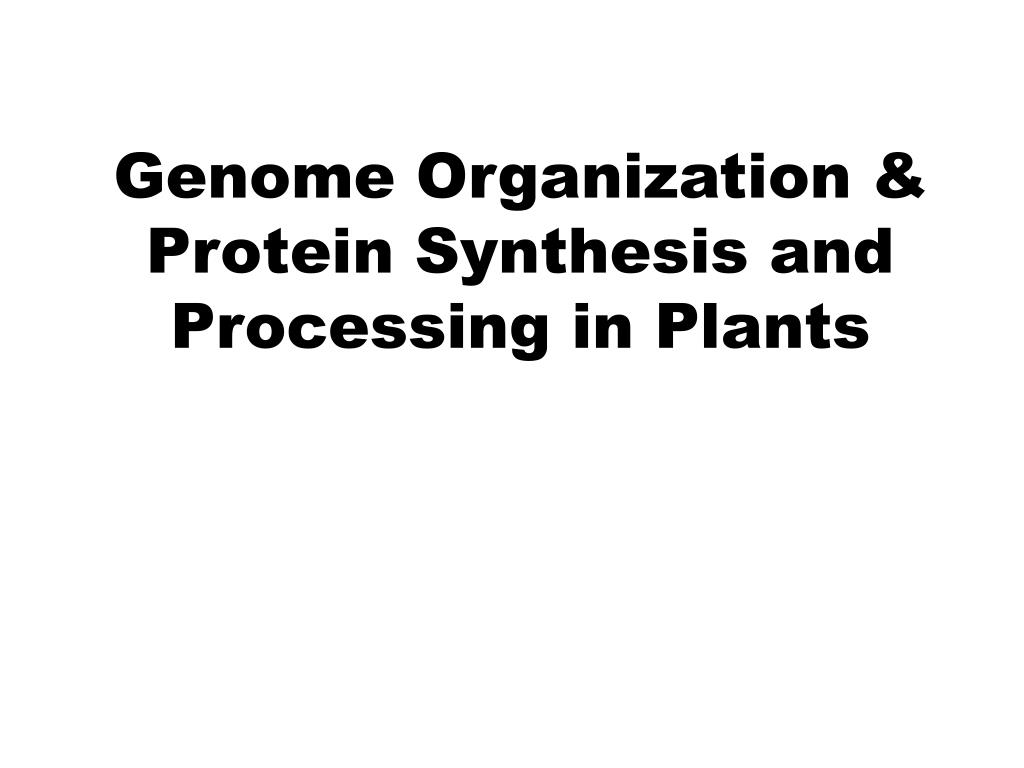genome organization protein synthesis and processing in plants l.