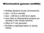 mitochondrial genome mtdna