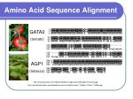 amino acid sequence alignment