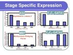 stage specific expression