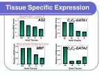 tissue specific expression