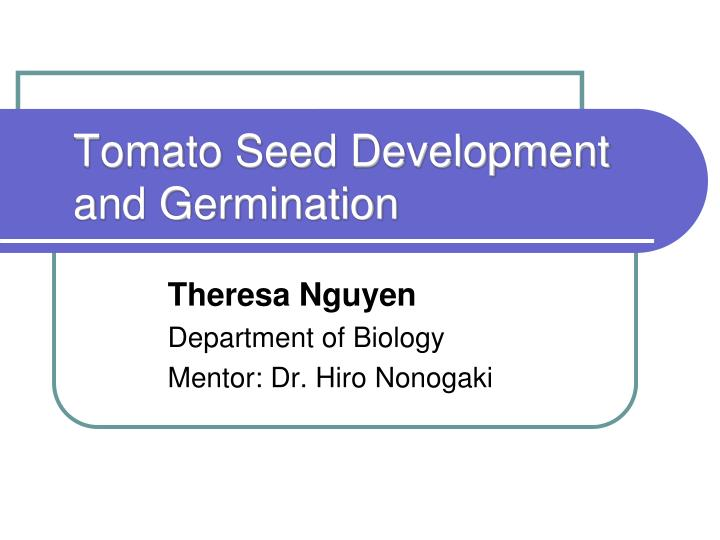 tomato seed development and germination n.