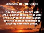 lessons of the geese16
