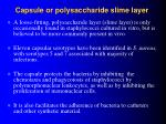 capsule or polysaccharide slime layer