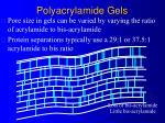 polyacrylamide gels11