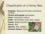 classification of a honey bee