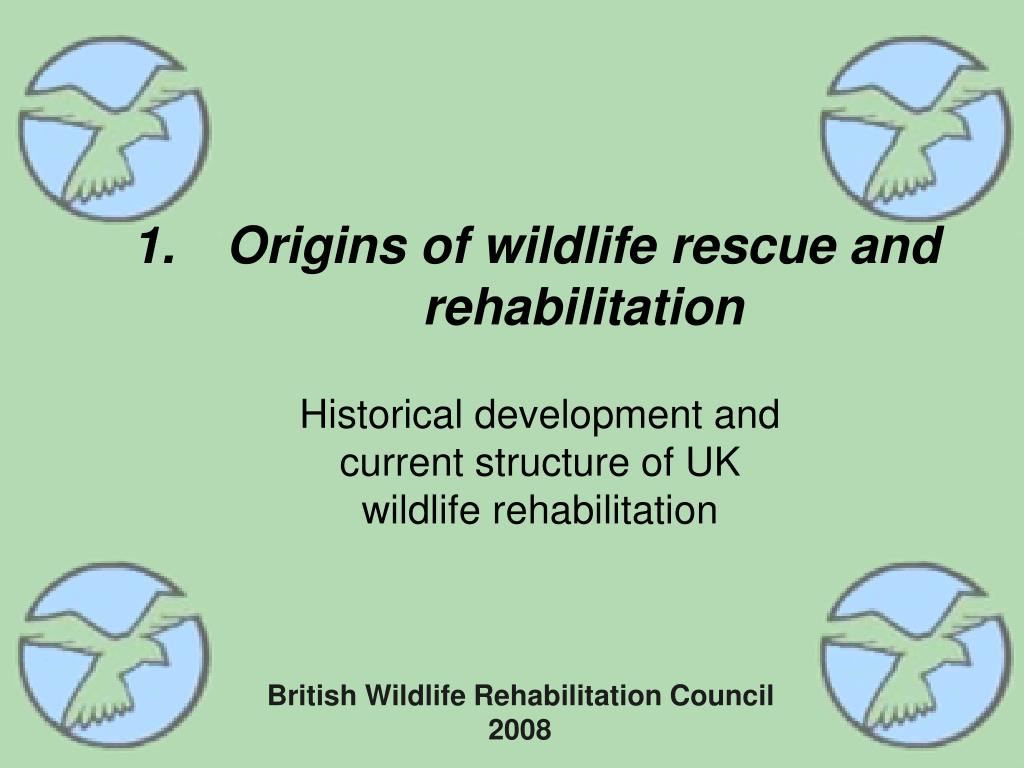 origins of wildlife rescue and rehabilitation l.