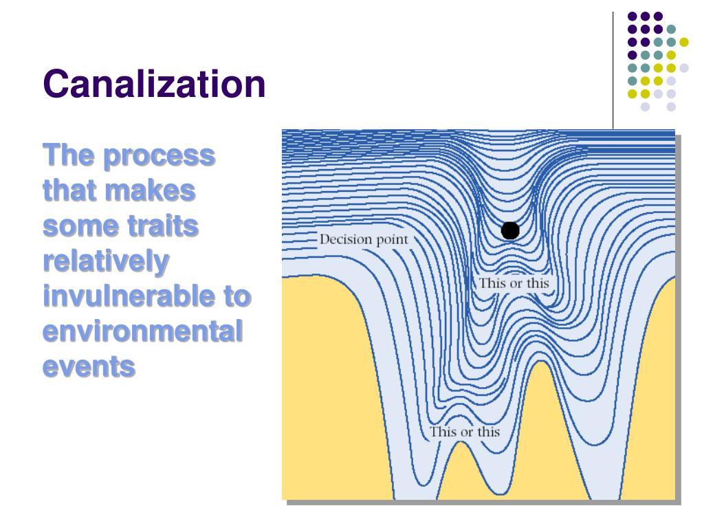 Canalization