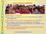gene polymorphism9