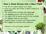 how a seed grows into a new plant