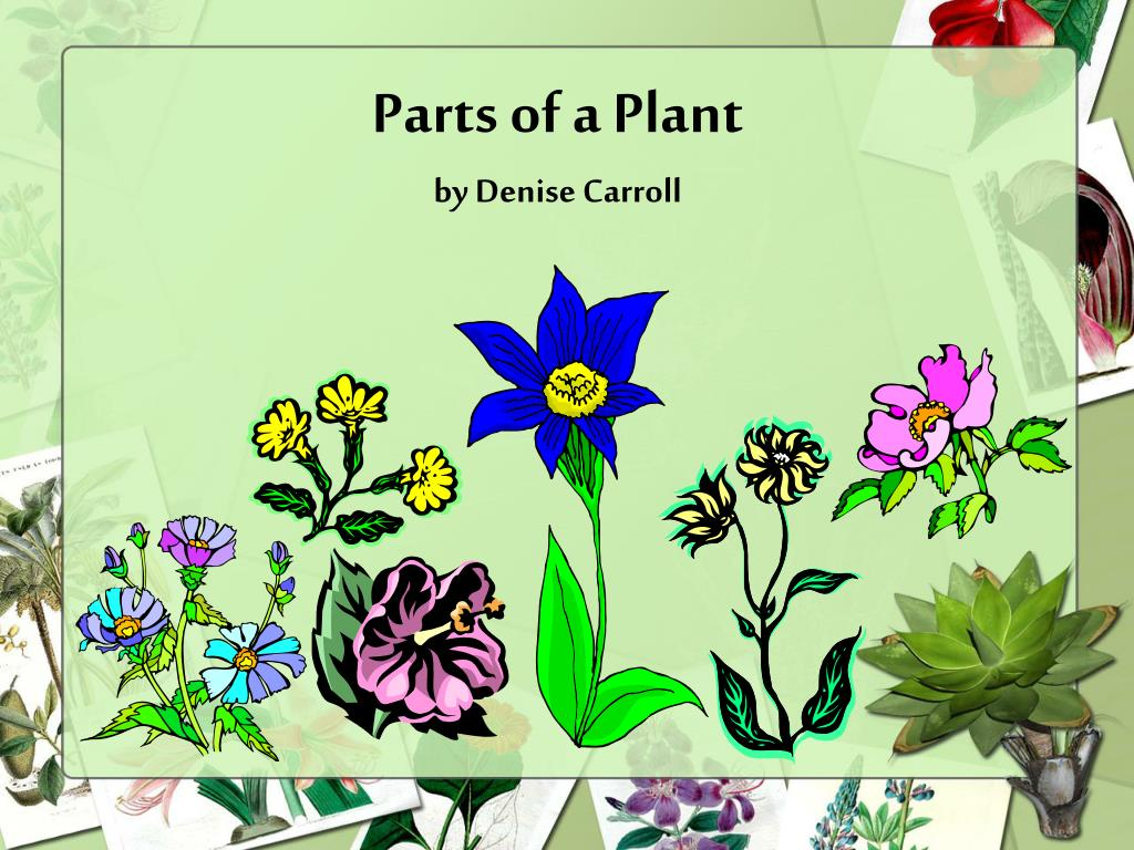 parts of a plant by denise carroll l.