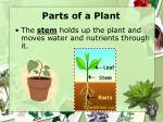 parts of a plant7