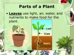 parts of a plant8
