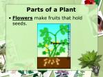 parts of a plant9