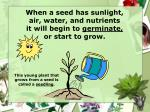 when a seed has sunlight air water and nutrients it will begin to germinate or start to grow