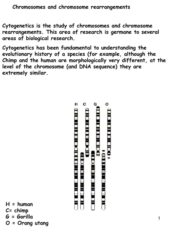 chromosomes and chromosome rearrangements l.