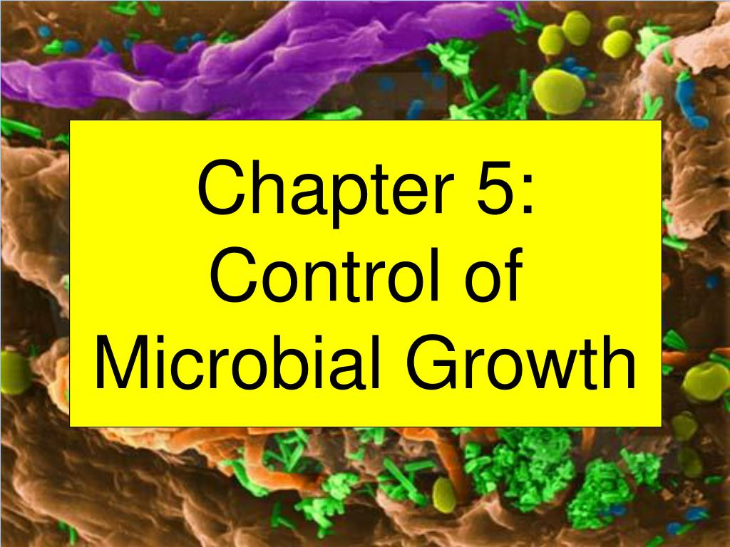 chapter 5 control of microbial growth l.