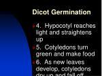 dicot germination1