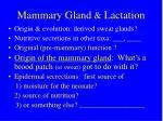 mammary gland lactation