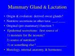 mammary gland lactation1