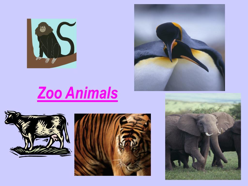 zoo animals l.