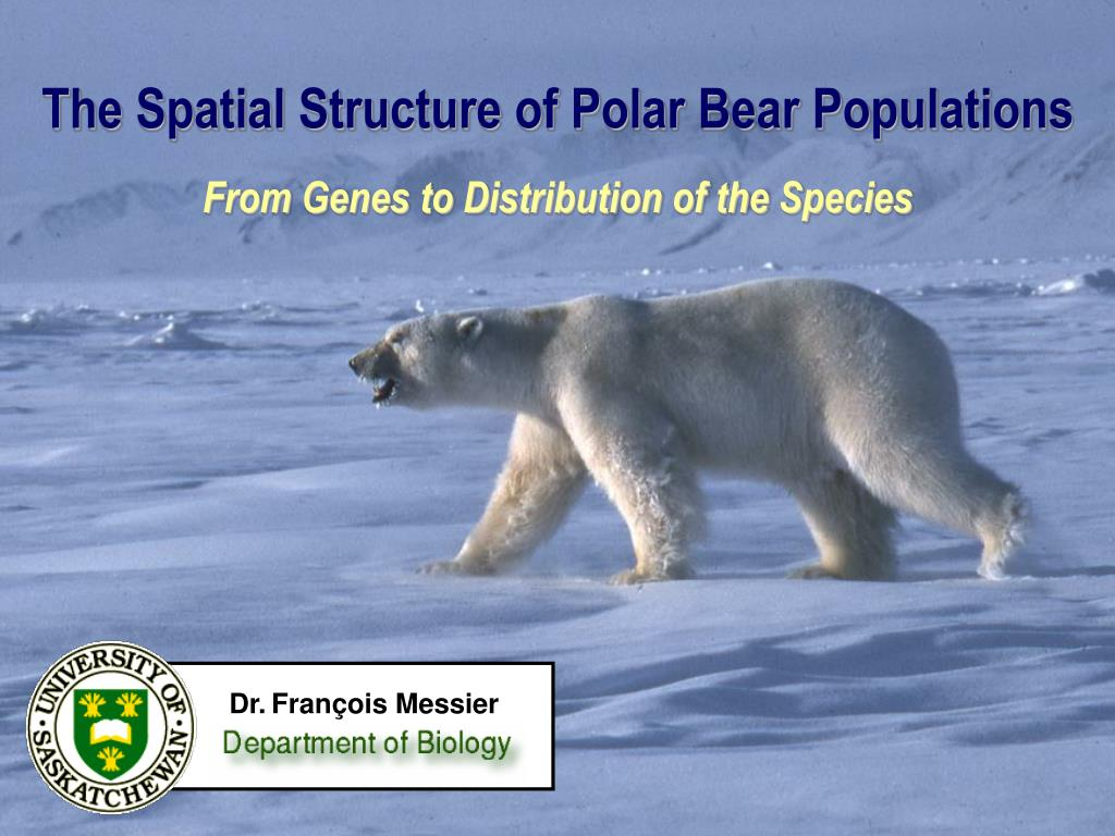 the spatial structure of polar bear populations from genes to distribution of the species l.