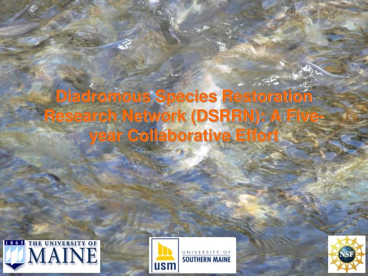 diadromous species restoration research network dsrrn a five year collaborative effort n.