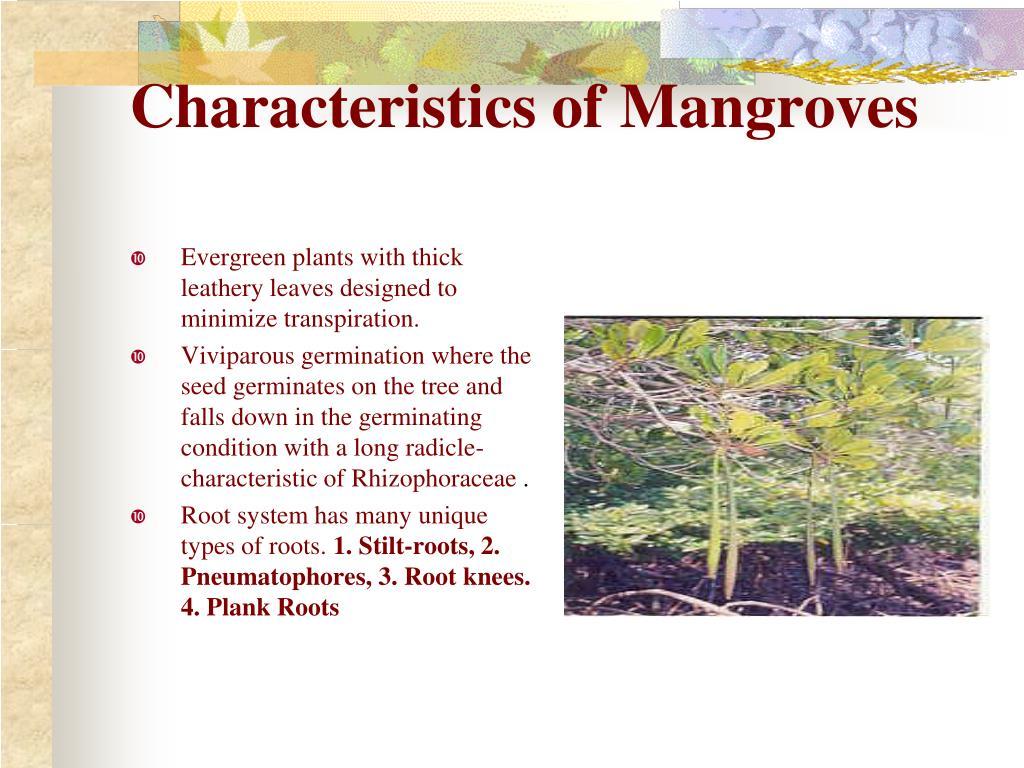 Characteristics of Mangroves