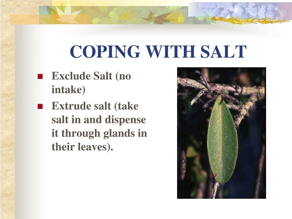 COPING WITH SALT