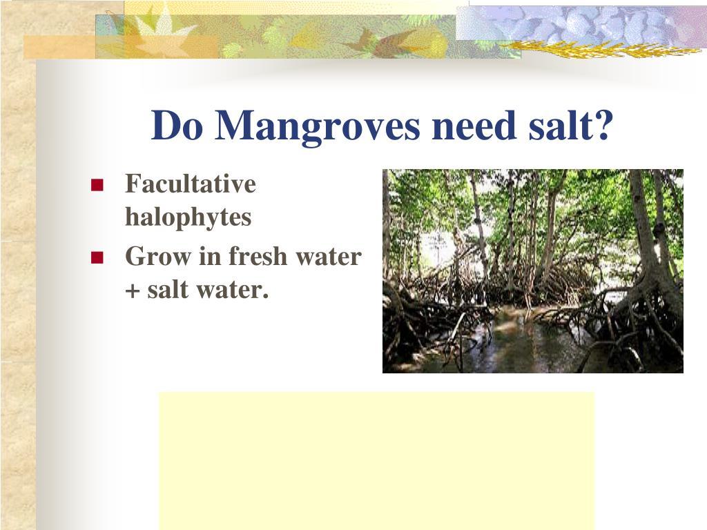 Do Mangroves need salt?