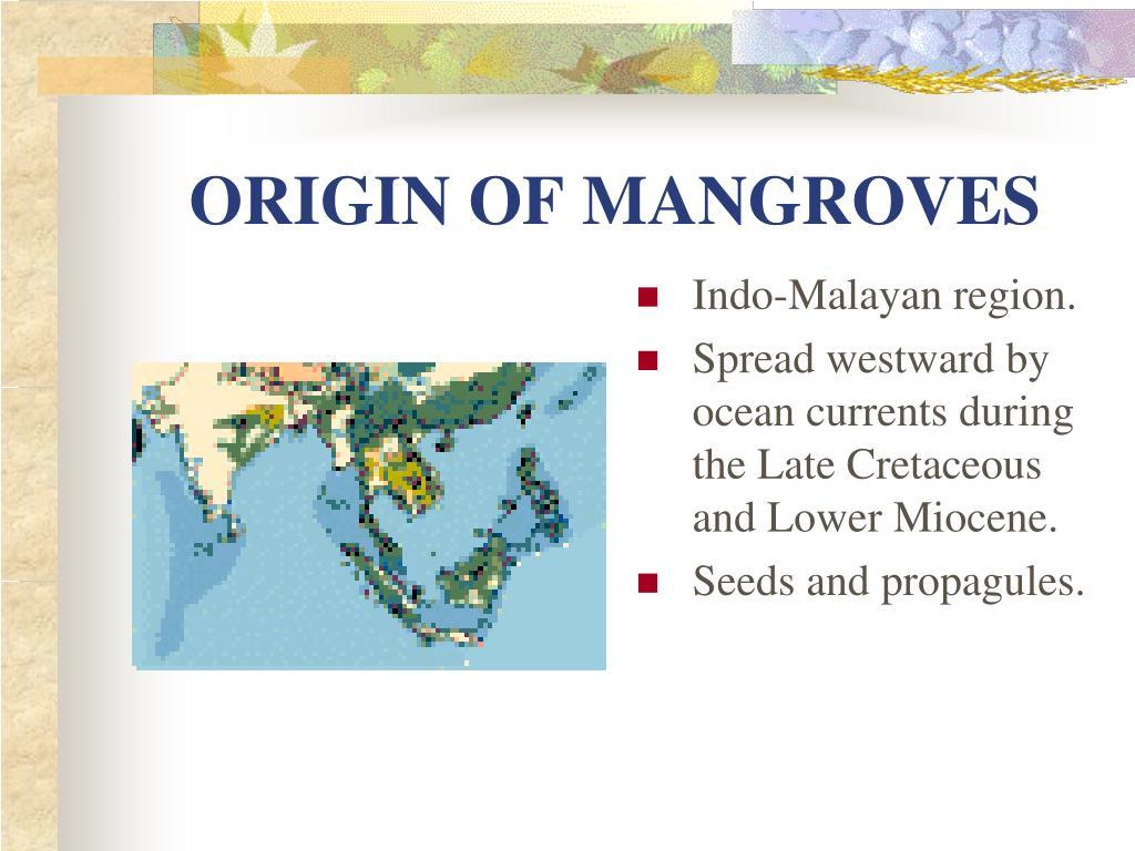 ORIGIN OF MANGROVES
