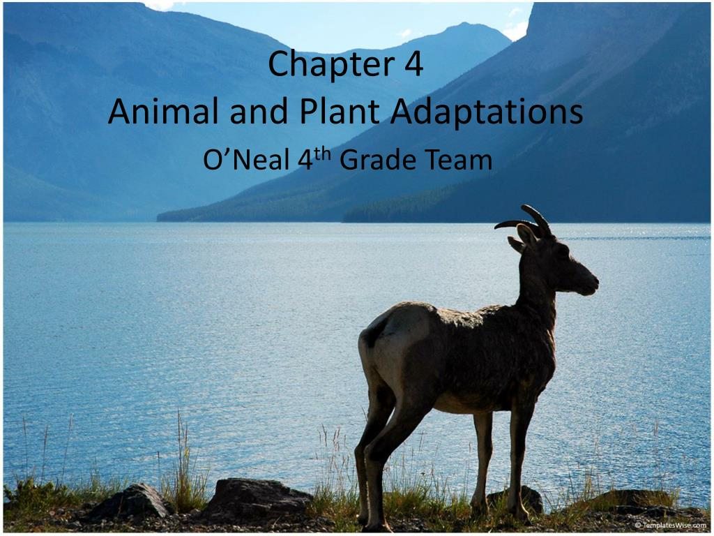 chapter 4 animal and plant adaptations l.