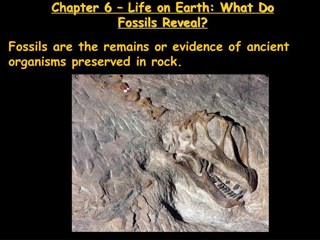 chapter 6 life on earth what do fossils reveal l.