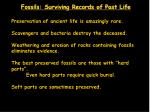 fossils surviving records of past life